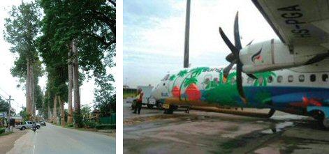 時代を感じさせる巨木群(左) 派手な模様のプロペラ機(スワナプーム空港)(右)