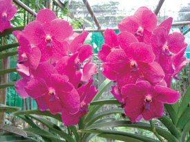 美しい紫色の蘭の花(蘭園にて)