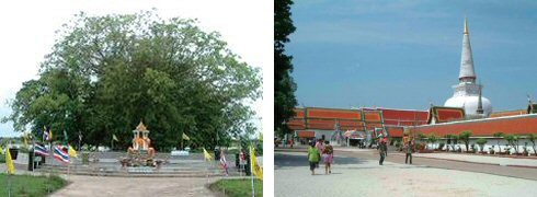 何とこれで一本の木です(フアサイ)(左) 荘厳なたたずまいのワットプラマハタート(右)