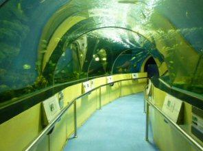 まるで海の底にいる感じ(水中トンネル)